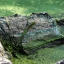 2014.07.08 Health department warns of blue-green algae on Lake Winnebago